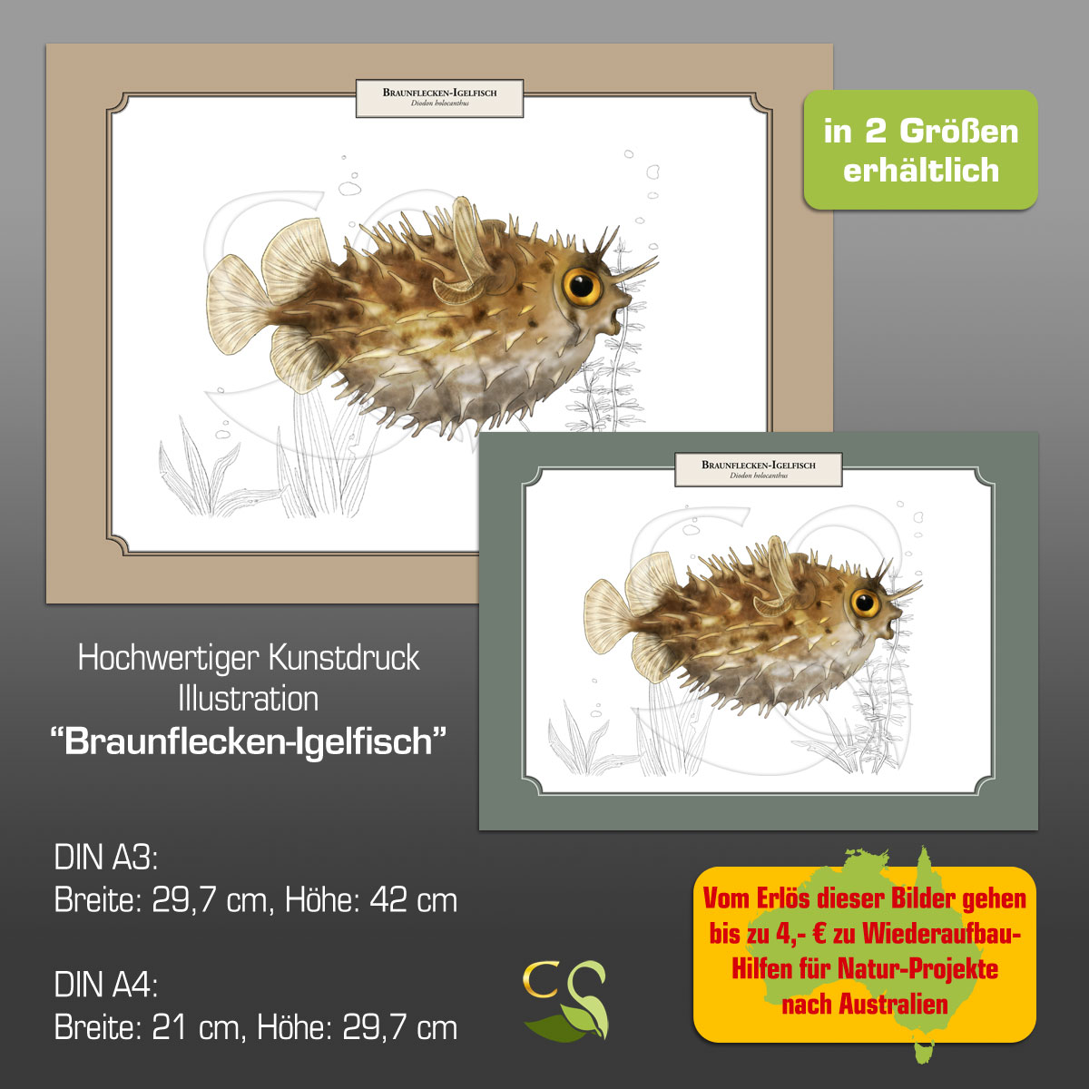 BraunfIgelfisch2GRfA