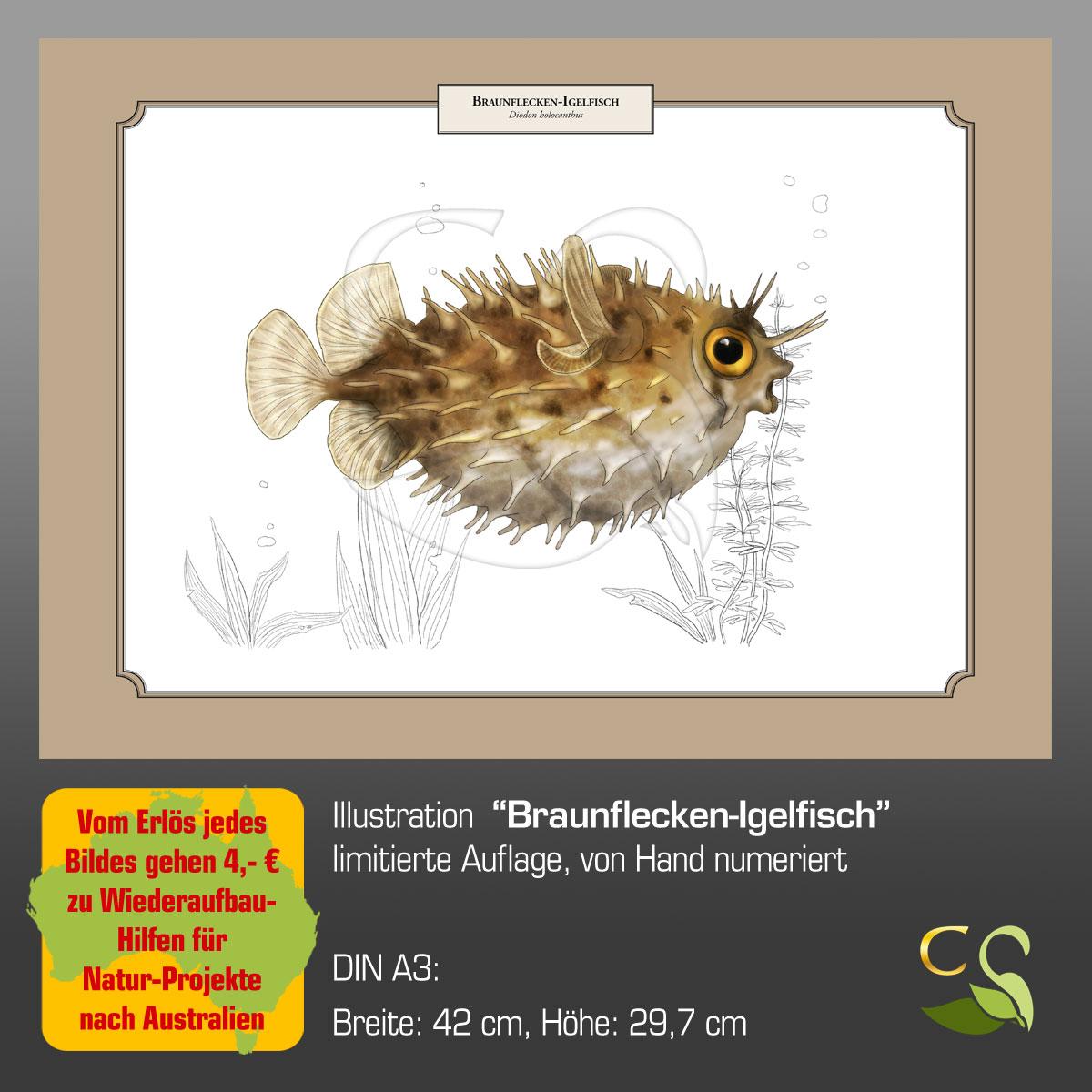 BraunfIgelfischA3fA