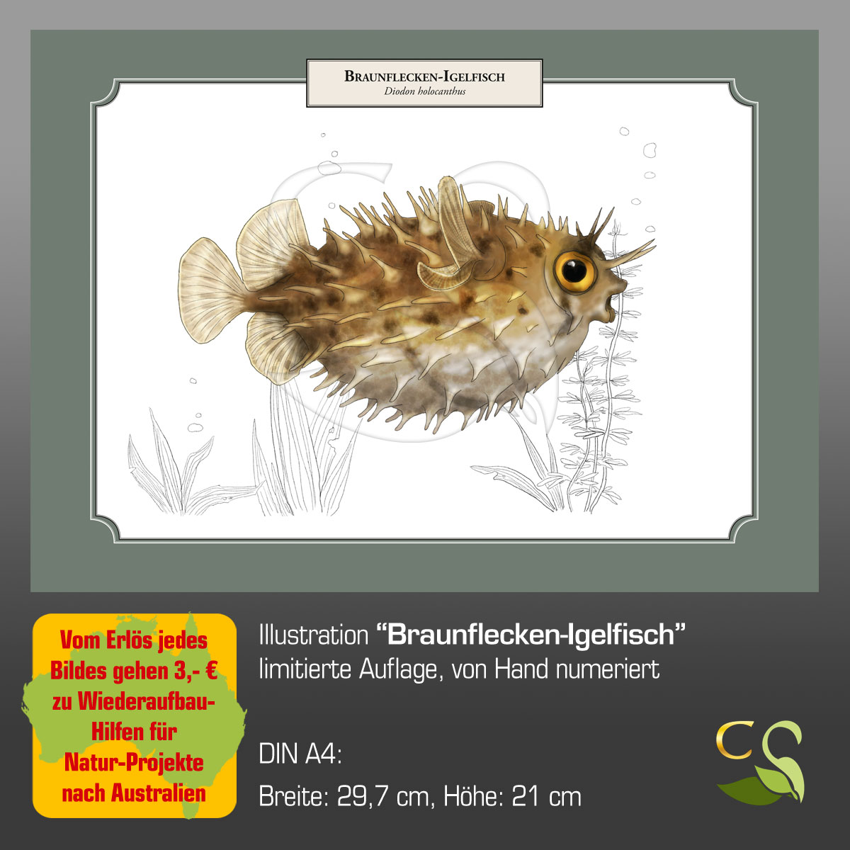 BraunfIgelfischA4fA