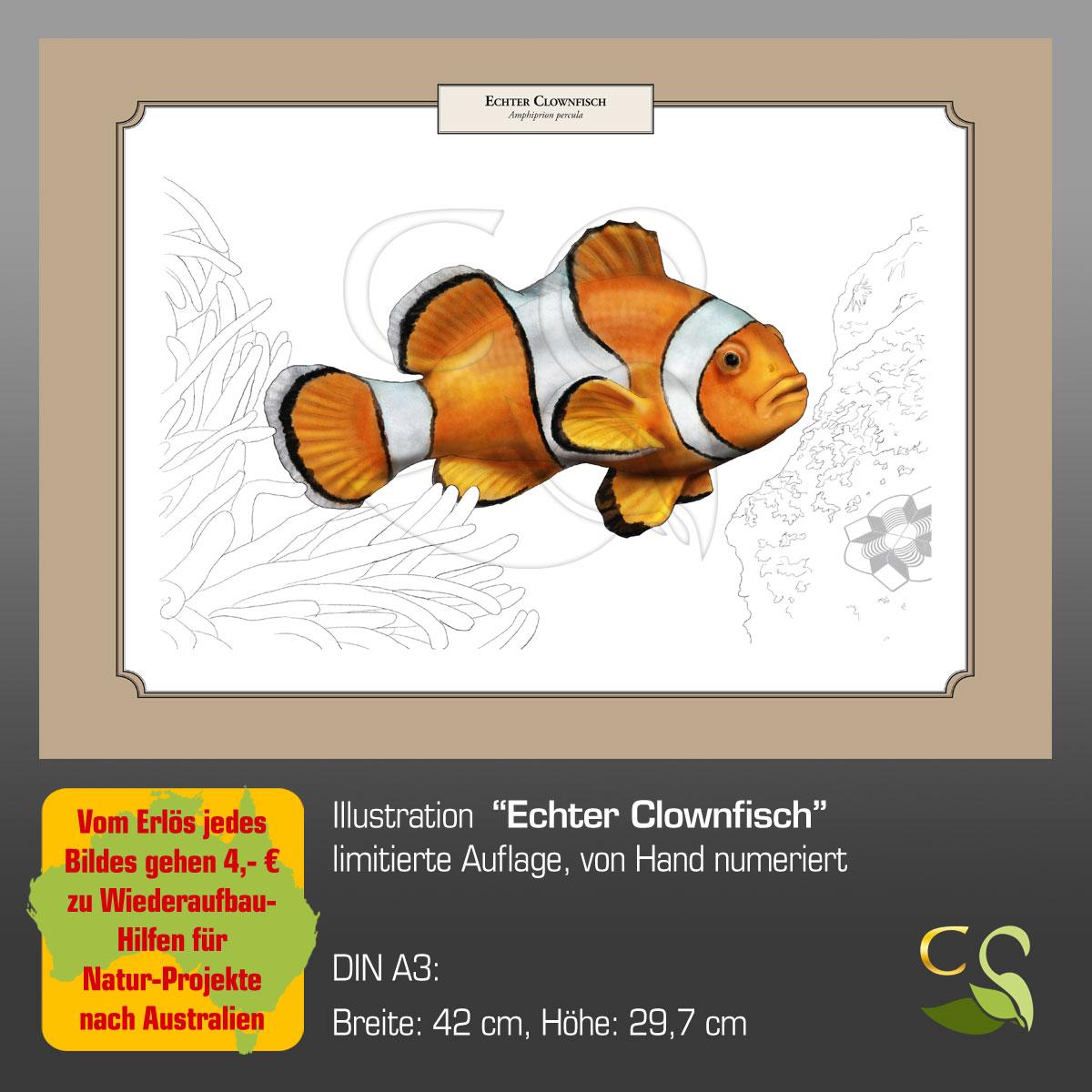 EchterClownfischA3fA